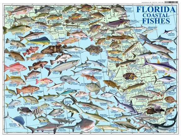 Florida freshwater fish identification for Florida freshwater fish species